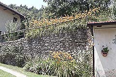 Organic Farm for sale Piemonte - Gardens