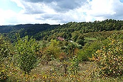 Organic Farm for sale Piemonte - Views