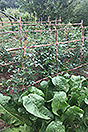 Organic Farm for sale Piemonte - Vegetable garden