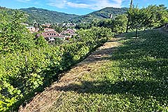 Restored Langhe Stone House and Guest Apartment for sale in Piemonte Italy - Vines