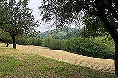 Italian Farmhouse for sale in Piemonte - Land