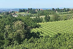 Spacious apartment with spectacular views for sale in Barolo - Barolo vineyard views