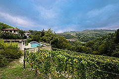 Restored Character House within its own Wine Estate - Vineyard location