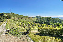 Country House for sale in Piemonte - Vineyard location