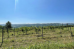 Country House for sale in Piemonte - Vineyards