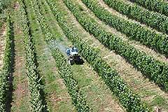 Country Estate and Vineyard - Vineyards